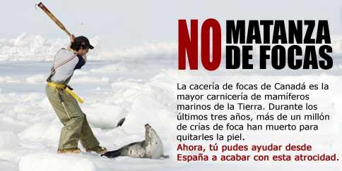 no-matanza-de-focas.jpg