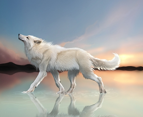 Las Mejores Ilustraciones De Lobos Ubuntu Life