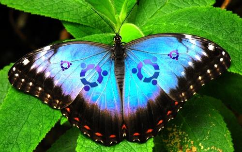 ubuntubutterfly