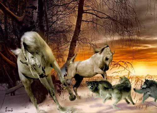 caballos-lobos