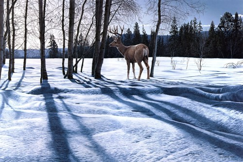 deer-winter-wallpaper