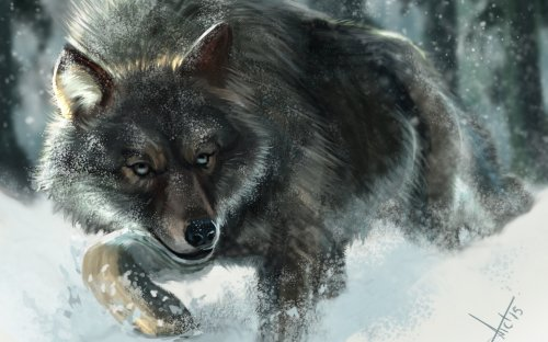 fantasy_original_art_artistic_artwork_wolf_wolves_2560x1600