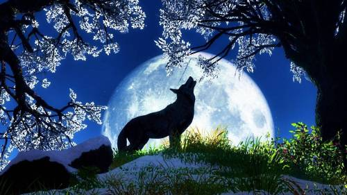 wpid-wolf-moon